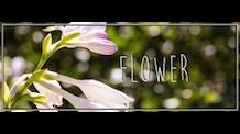 Flower - A Short Film by Nick Koscik