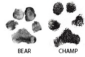 Bear and Champ's pawtographs which will be included in signed editions
