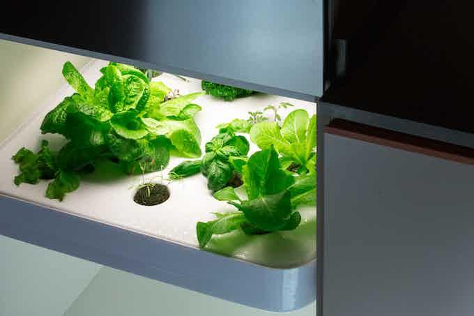 """A 16 plants herb garden in a 60cm / 24"""" kitchen cabinet"""