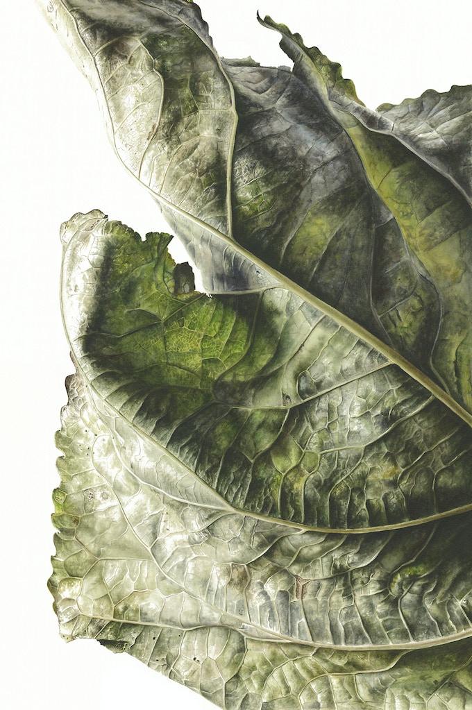 Leaf 041120151155, Poplar (Populus x canadensis), 76 x 56cm, Watercolour on paper