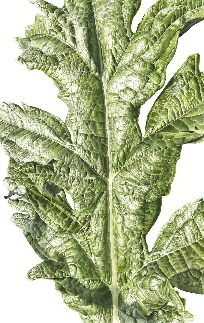 Leaf 181120141339, Artichoke (Cynara cardunculus var. scolymus), 76 x 56cm, Watercolour on paper