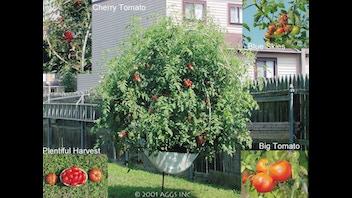 Above Ground Gardening Systems
