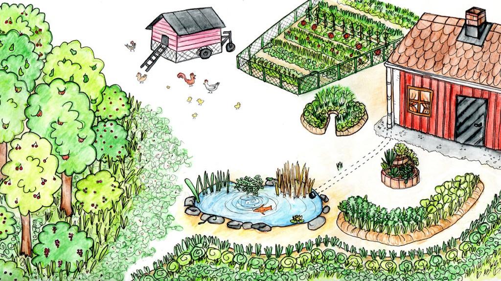 Permakultur! Framtiden i din trädgård. project video thumbnail