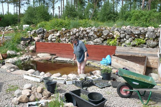 Dammar ökar biodiversiteten, utjämnar temperaturen över dyget, ger bevattningsvatten som har lagom temperatur och bra pH samt är näringsrikare än kranvatten. Plantor och tanter trivs också i dammar!