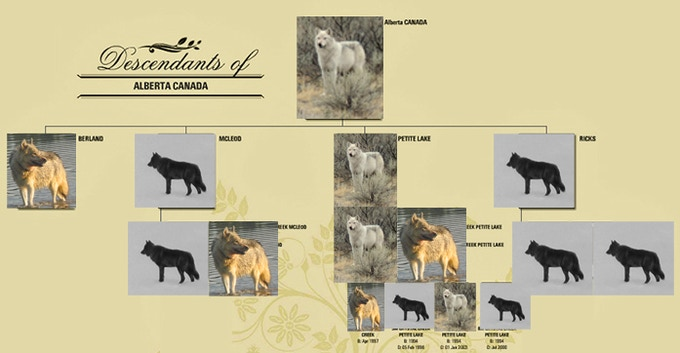 Poster on official paper of the descendants of the Alberta, Canada reintroduction