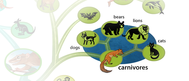 The order Carnivora is a clade.