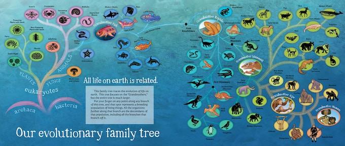 Karen's phylogenetic tree from Grandmother Fish.