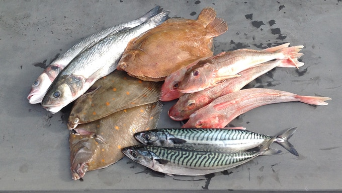 Dayboat fish from the South Coast