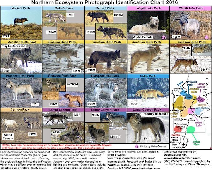 2016 Wolf Chart backside