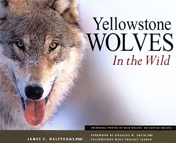 Yellowstone Wolves in the Wild autographed by Jim Halfpenny