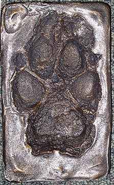 Cold cast bronze footprint of alpha female wolf 40F/42F