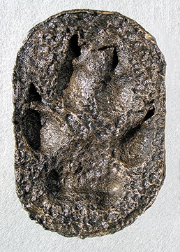 Cold cast bronze footprint of alpha male wolf 21M