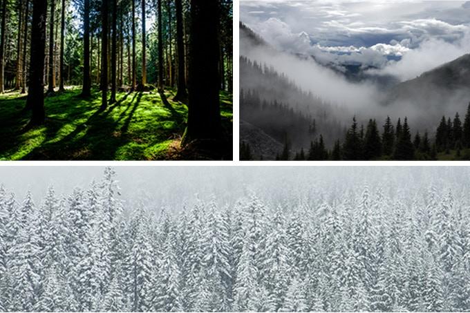 """""""Intemporel, simplicité, beauté de la nature """""""