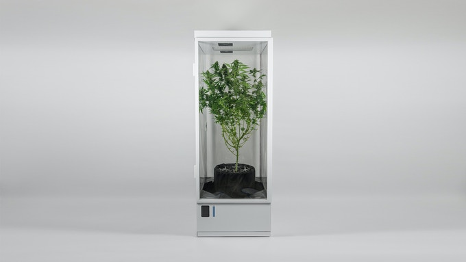 Medicinal plant grown in our earlier prototype