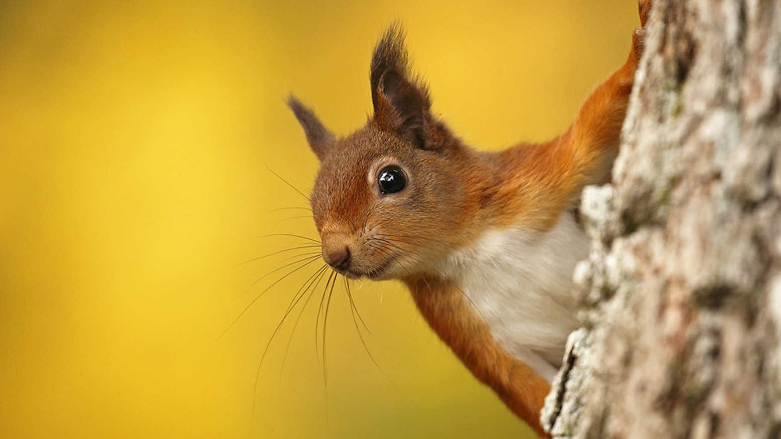 Stunning book showcasing the amazing images of red squirrels and their precious forest home by wildlife photographer Neil McIntyre