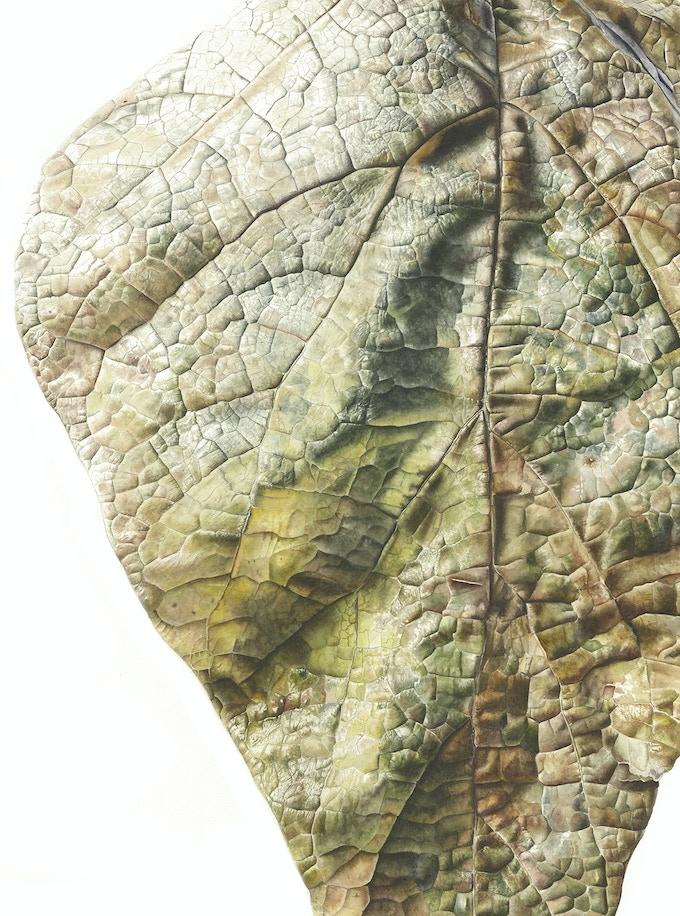 Leaf 071120151031, Brown Catalpa (Catalpa bignonioides), 76 x 56 cm, Watercolour on Paper