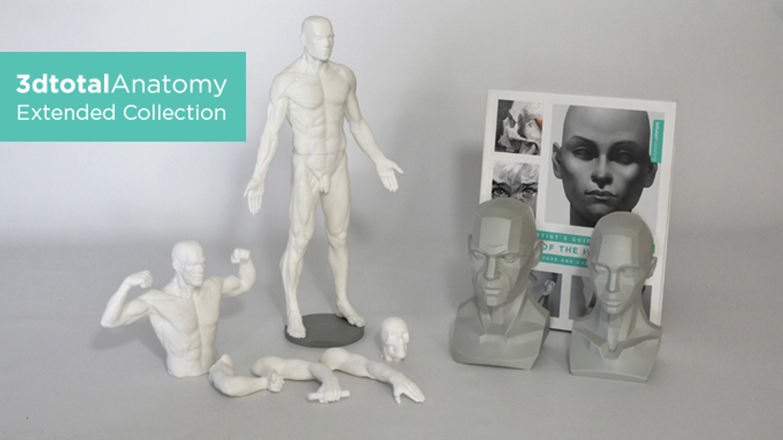 Expand your artistic understanding of anatomy with new planar busts, an adaptable male anatomy figure and invaluable reference book.