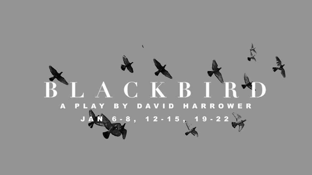 Blackbird by David Harrower project video thumbnail