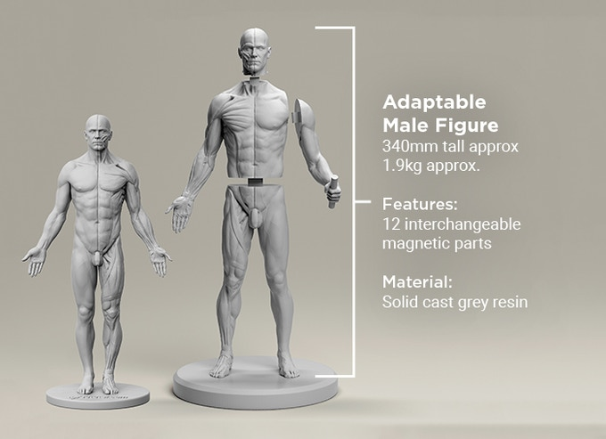 3dtotal Anatomy Reference Extended Collection By 3dtotal Games
