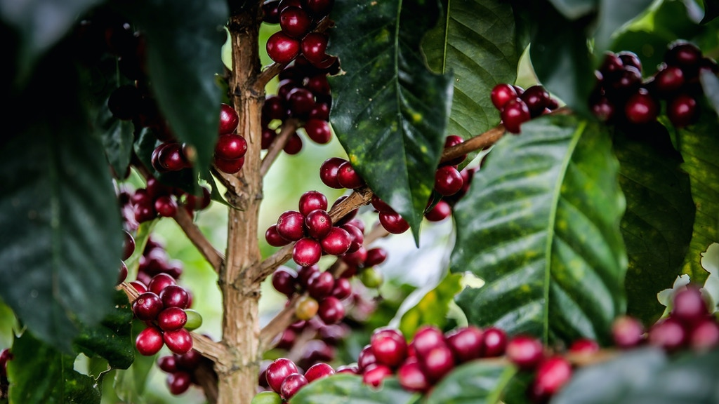 El Fénix - Community Coffee Wet Mill project video thumbnail