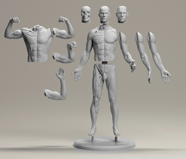3dtotals Anatomical Collection Male Figure By 3dtotal Games New