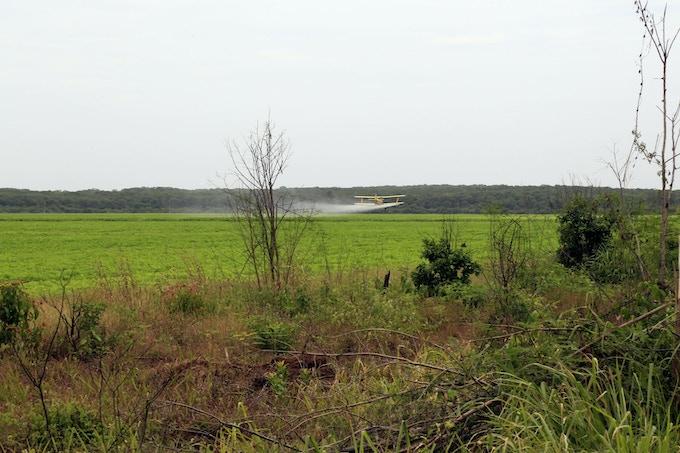 Productores privados de soya transgénica fumigan con Glifosato y otros herbicidas grandes extensiones de terreno con avionetas.
