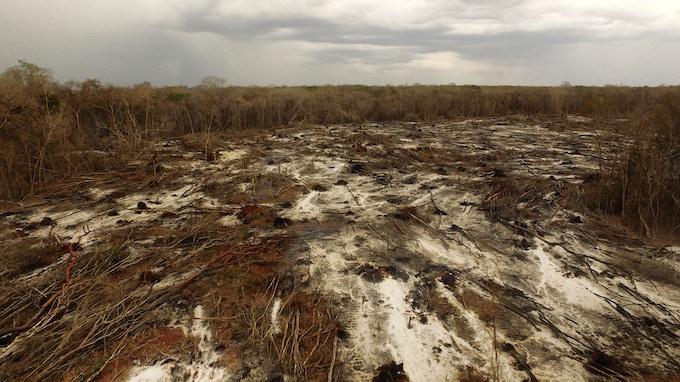 La organización The Nature Conservancy refiere que año con año se pierden más 80 mil hectáreas de Selva Maya en la península de Yucatán.