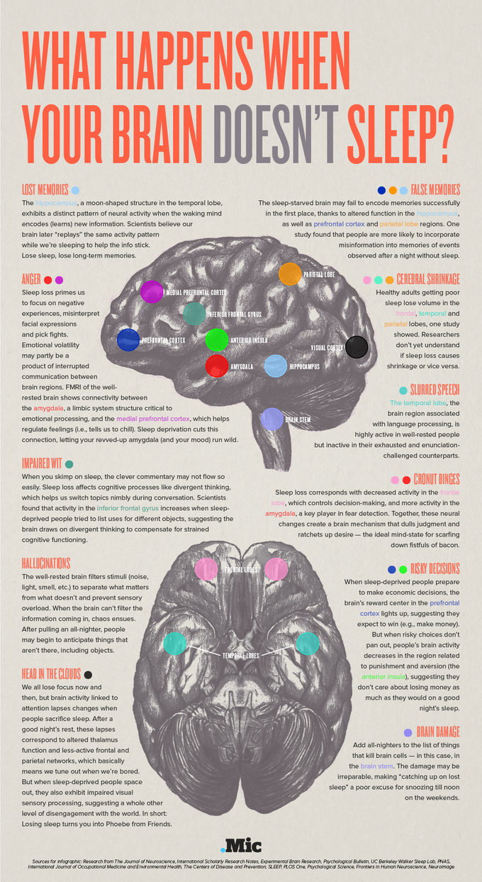 Why the Brain Needs Sleep