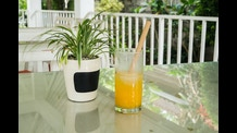 BAMBOO STRAW - 100% ECOfriendly