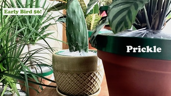 Prickle - The best way to bring the outdoors in