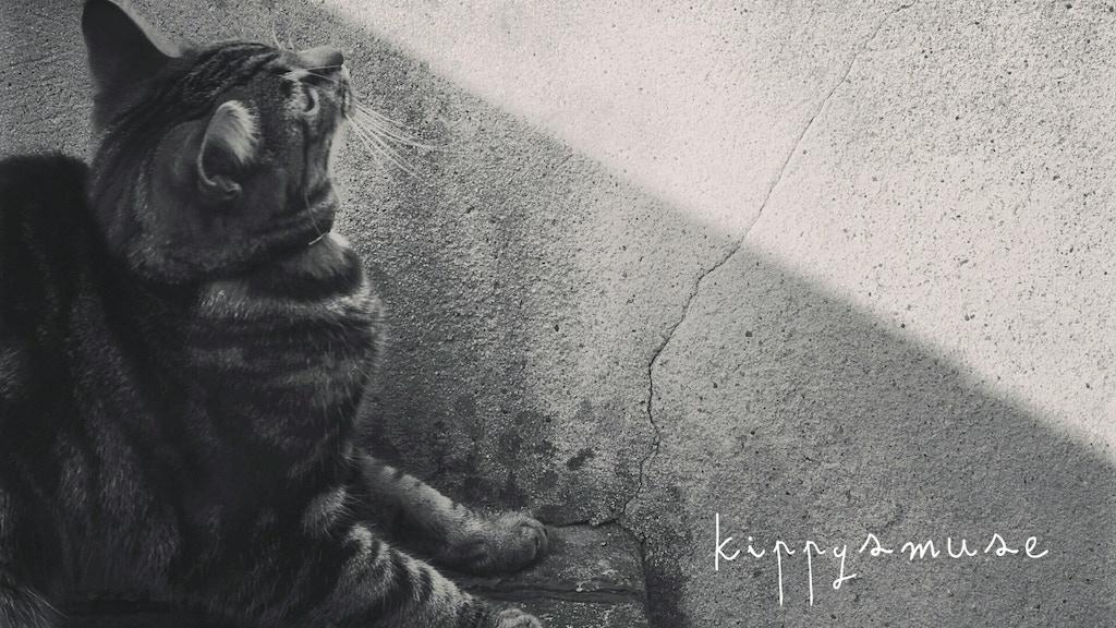 Kippysmuse - 'My #9' (Debut Album) project video thumbnail
