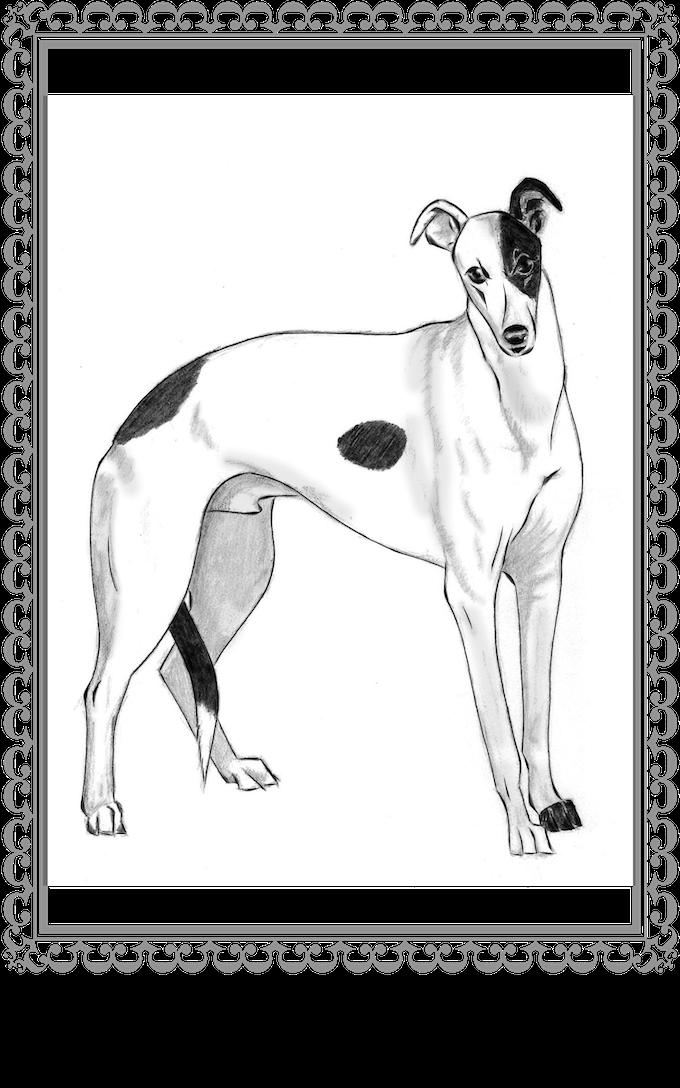 Pet Portrait in final illustration form