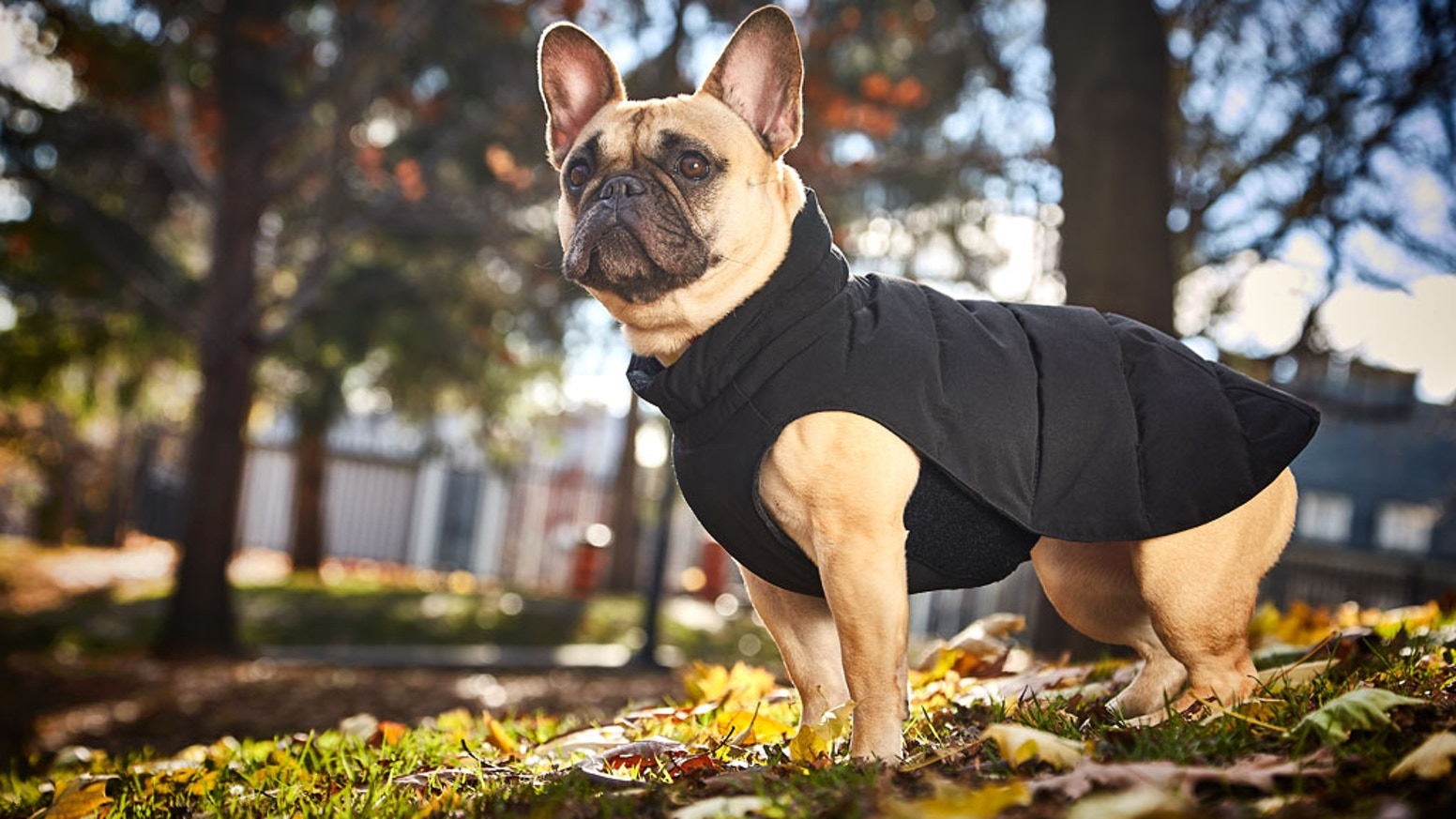 The world's easiest and fastest-fitting winter dog parka.  Canadian designed and Canadian made, all backed with a 5 year guarantee.