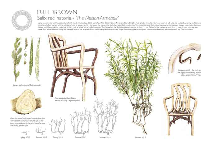 Botanical Illustration of the 1st Edition Nelson Chair
