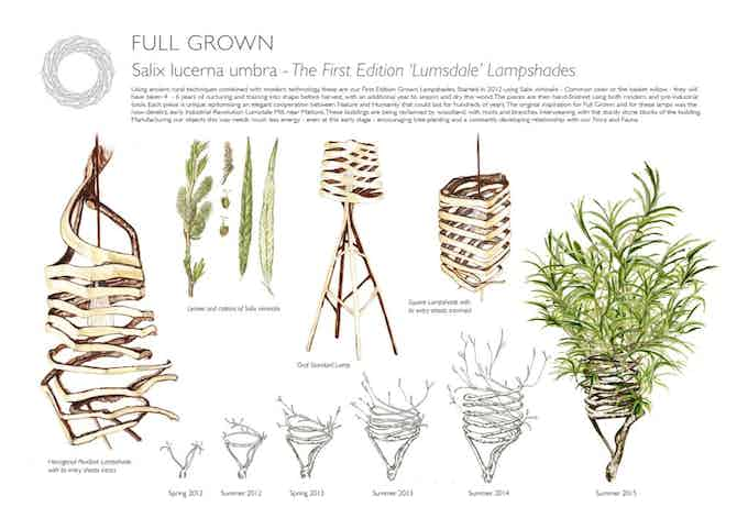 Botanical Illustration of the 1st Edition Lumsdale Spiral Lamps