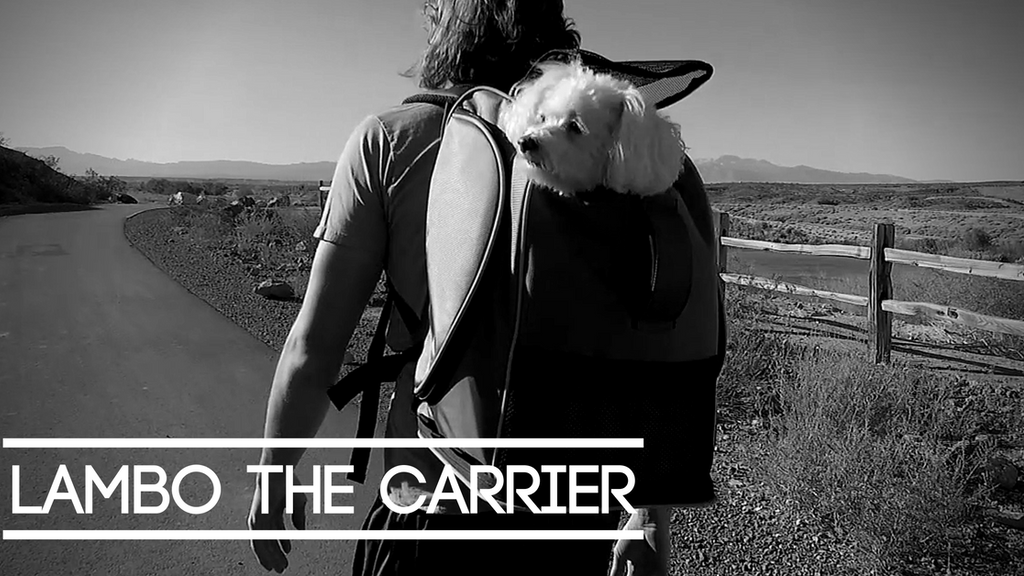 Your Pet Deserves Better Carrier: Lambo Backpack Carrier project video thumbnail