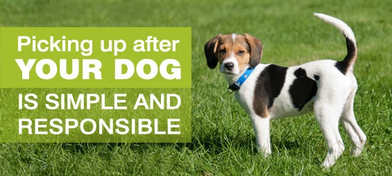 how to clean up dog poop without gagging