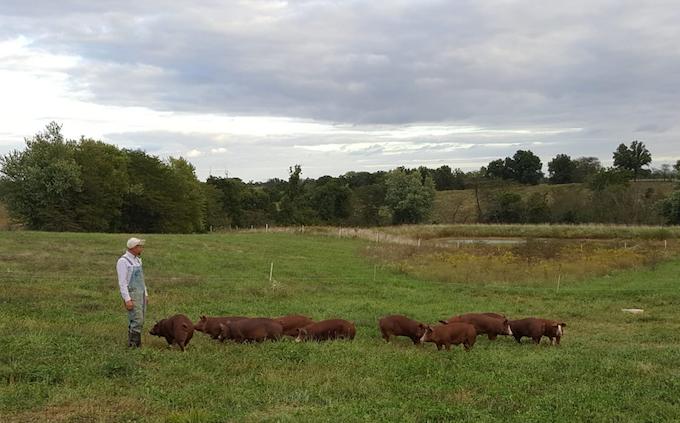 grass fed pork