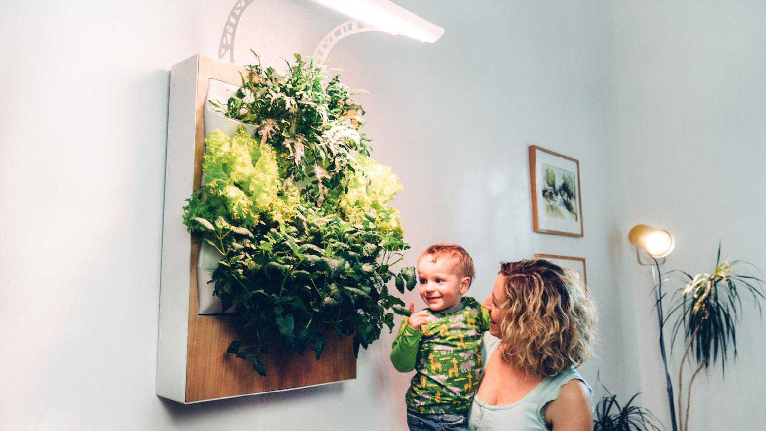 Herbert Grow Fresh Organic Food At Home