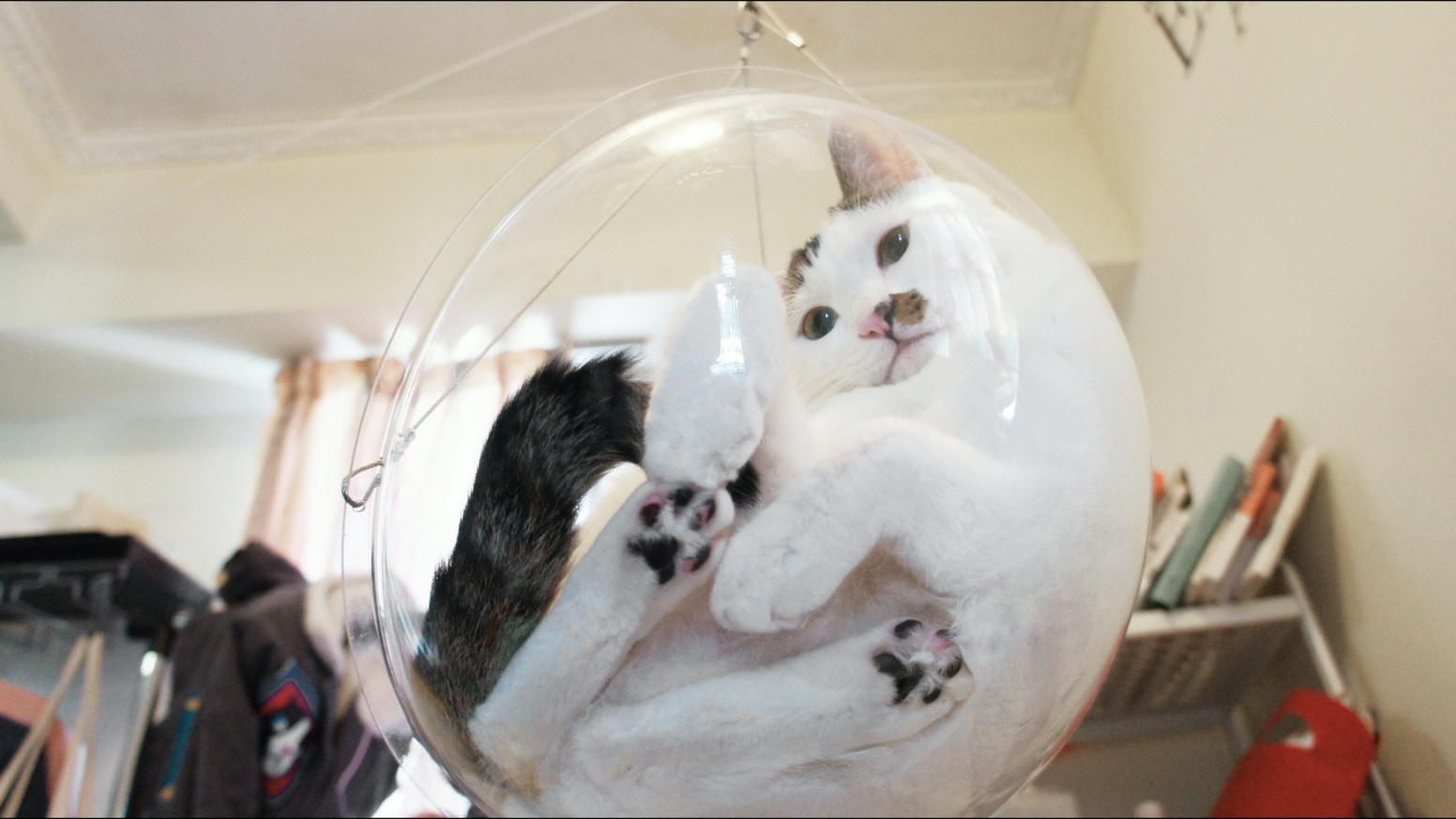 A fully transparent swing where your beloved cat can rest and play in. Look at the cute paws and fat tummy of your cat from all angles.