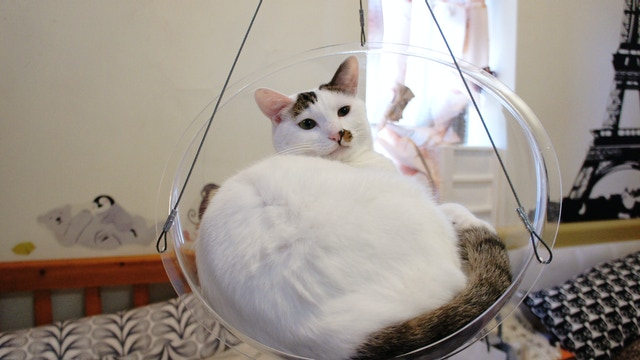 Dim Dim The Bubble Swing Chair Bed For Your Cat By Yan