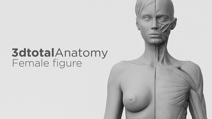 Introducing the second model in a range of affordable anatomy reference figures for traditional and digital artists alike...