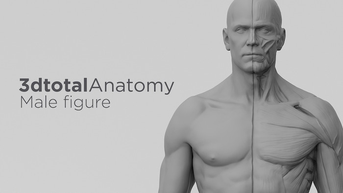 3DTotal\'s Anatomical Collection: Male figure by 3DTotal Games ...