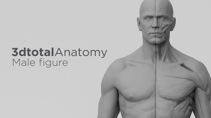 3DTotal's Anatomical Collection: Male figure by 3DTotal