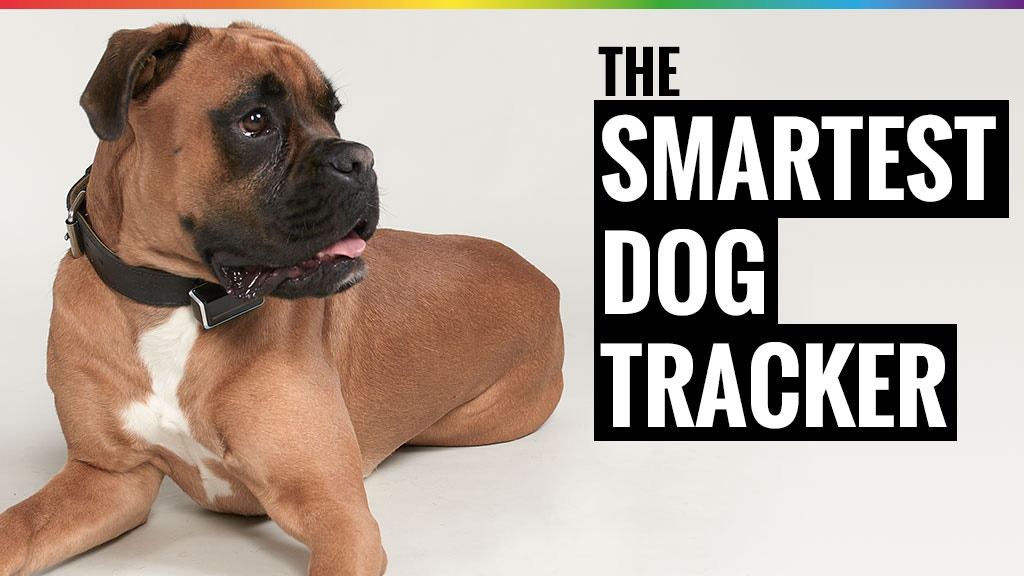 The smartest dog tracker suitable for every dog collar project video thumbnail