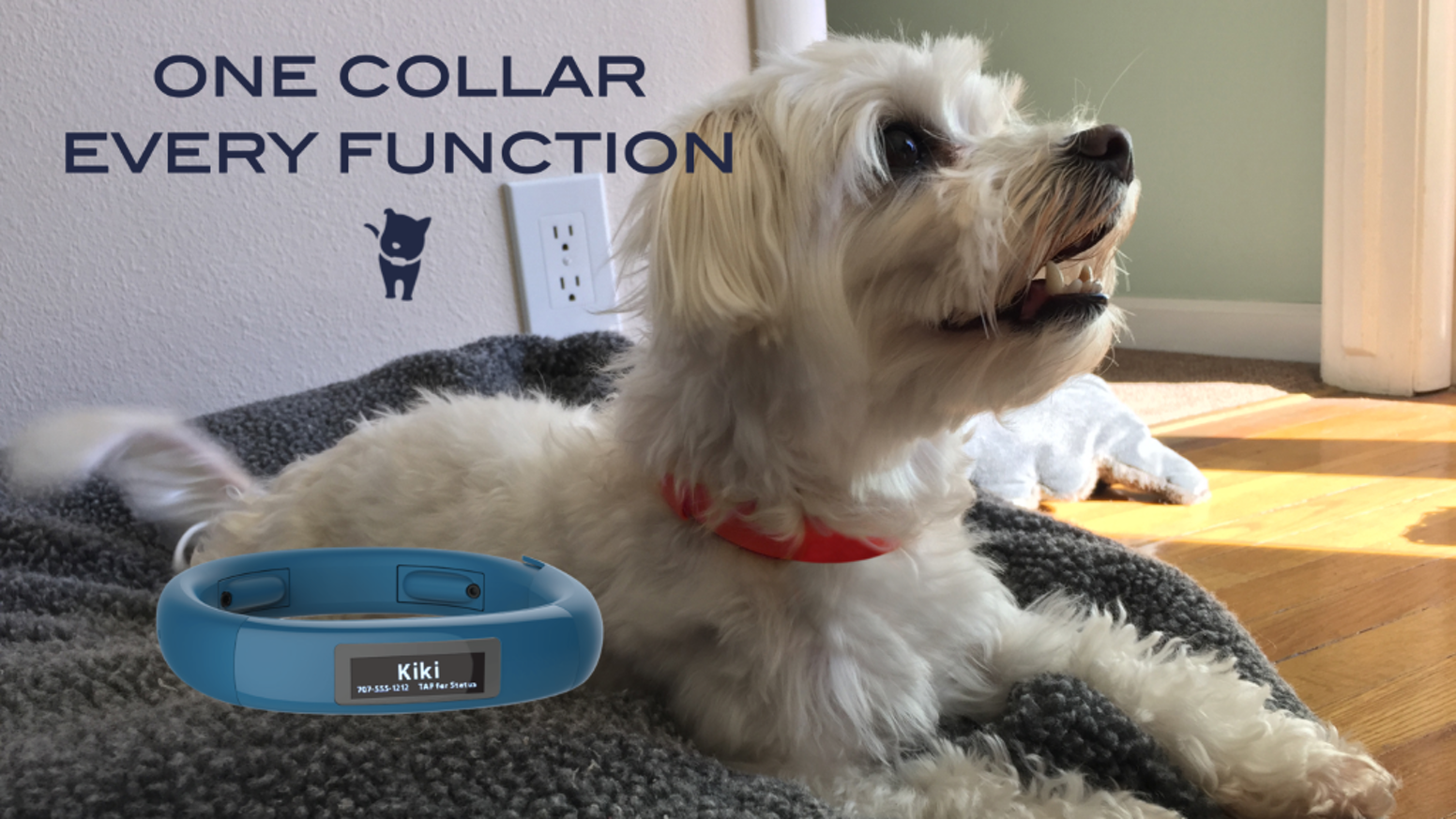 Scollar Mini is built on an open platform to grow and change with the dynamic needs of your pets, for every stage of their lives.