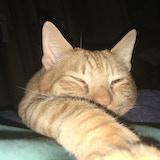 DC Kitties