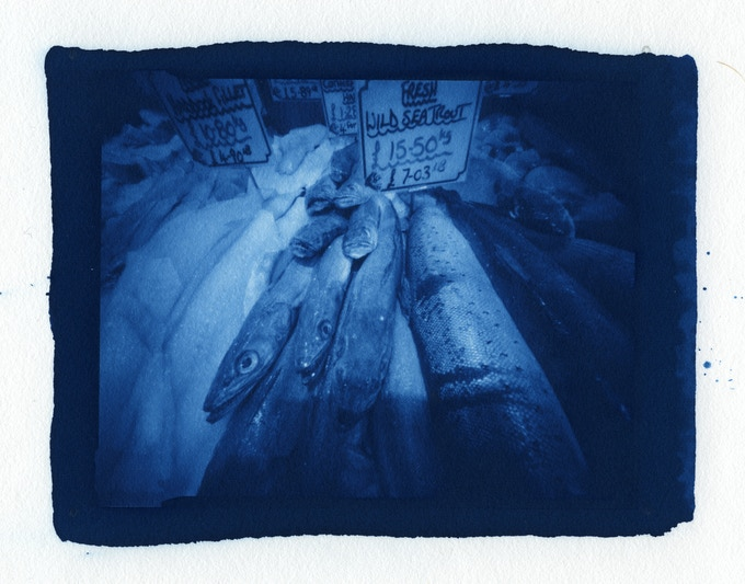 Paul Daskarolis, 'Fish', new cyanotype print from pinhole image made on Ilford 5 x 4 film
