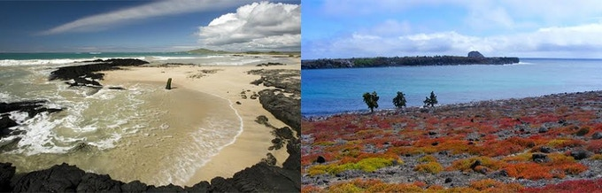 White sand beaches and turquoise waters (Left: Beach on Isabela; image by Bill Gozansky; Right: South Plaza Island; image by Lisa Woolfe)