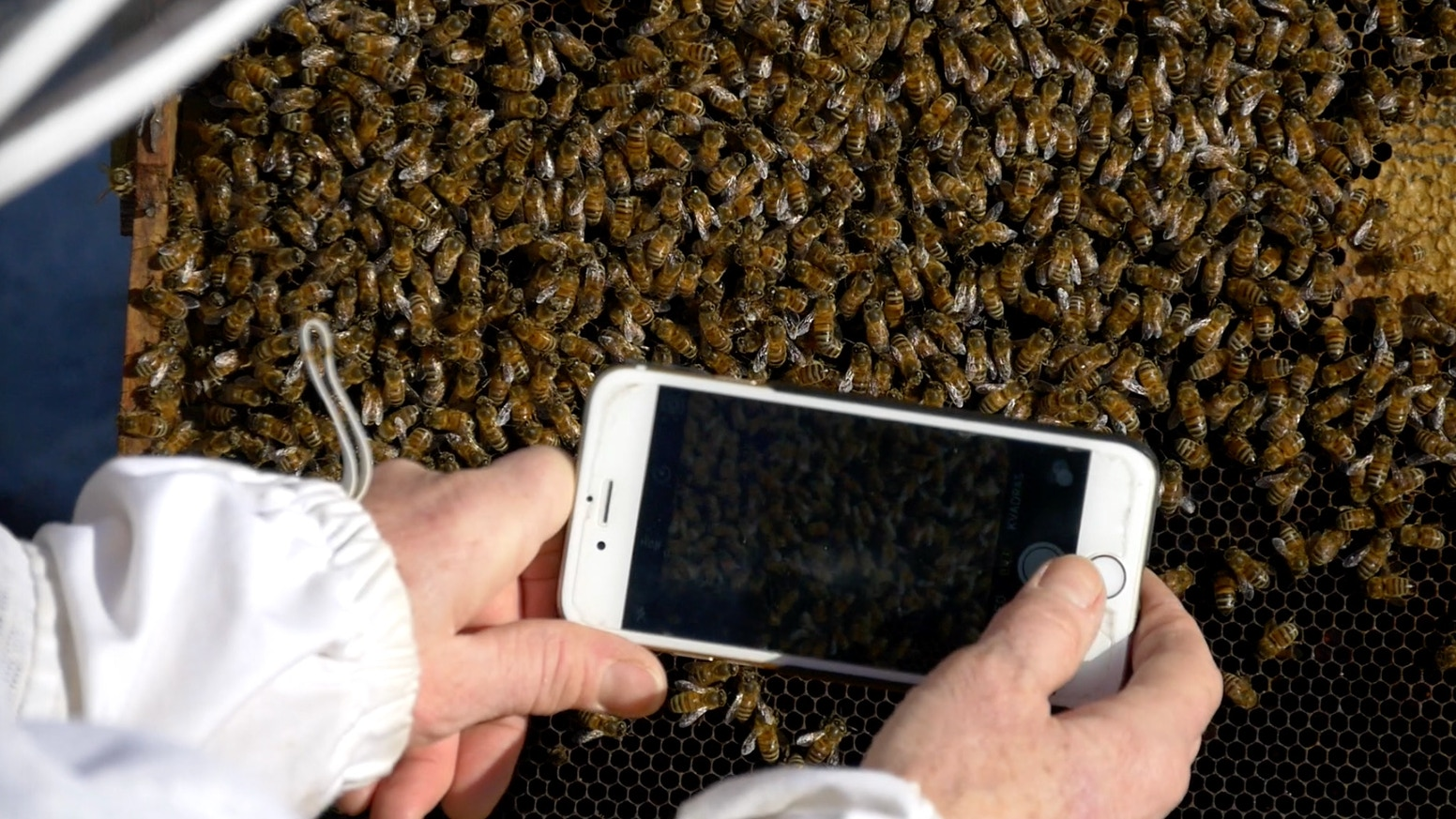 Varroa mites kills bees! BeeScanning reveals the parasite. Tells beekeeper to treat. Take picture with your phone, let the App analyze.